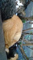 菊池隆志 公式ブログ/『三匹で寝る♪o(^-^)o 』 画像1
