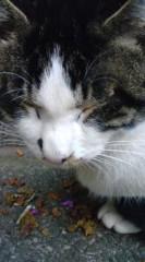 菊池隆志 公式ブログ/『まさに眠り猫♪o(^-^)o 』 画像1