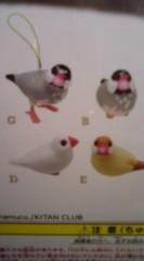 菊池隆志 公式ブログ/『文鳥ストラップぅ♪o(^-^)o 』 画像2