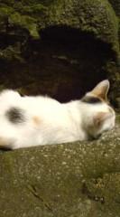 菊池隆志 公式ブログ/『仔猫は元気♪o(^-^)o 』 画像1
