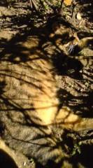 菊池隆志 公式ブログ/『木陰でニッコリ♪(=^ ω^=)』 画像1