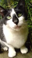 菊池隆志 公式ブログ/『よっ!おネコ前♪(  ̄▽ ̄)』 画像1