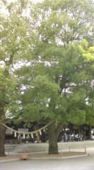 菊池隆志 公式ブログ/『御神木& 本殿♪o(^-^)o 』 画像2