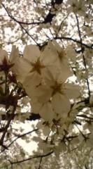 菊池隆志 公式ブログ/『桜を愛でながら♪o(^-^)o 』 画像1