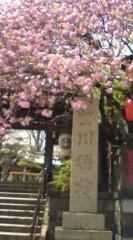 菊池隆志 公式ブログ/『豊川稲荷と桜♪o(^-^)o 』 画像1