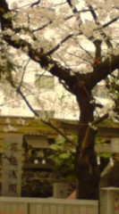 菊池隆志 公式ブログ/『芸能浅間神社ぁ♪o(^ ∀^)o』 画像1