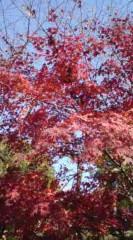 菊池隆志 公式ブログ/『紅葉だぁねぇ♪o(^-^)o 』 画像2
