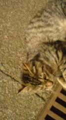 菊池隆志 公式ブログ/『猫それぞれ♪o(^-^)o 』 画像2