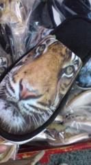 菊池隆志 公式ブログ/『獅子ッパ♪虎ッパ♪(  ̄▽ ̄)』 画像2
