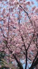 菊池隆志 公式ブログ/『何桜かなぁo(^-^)o 』 画像2