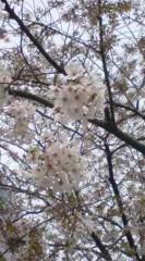 菊池隆志 公式ブログ/『隅田公園より♪o(^-^)o 』 画像2