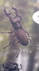 菊池隆志 公式ブログ/『日本のクワガタ♪o(^-^)o 』 画像3