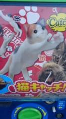菊池隆志 公式ブログ/『猫キャッチ♪(  ̄▽ ̄)』 画像1