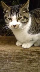 菊池隆志 公式ブログ/『眠り猫o(^-^)o 』 画像1