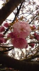 菊池隆志 公式ブログ/『隅田公園より♪o(^-^)o 』 画像3