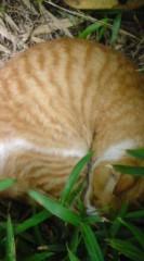 菊池隆志 公式ブログ/『眠りネコ�o(^-^)o 』 画像2