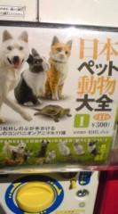 菊池隆志 公式ブログ/『犬、猫、兎、亀♪o(^-^)o 』 画像1