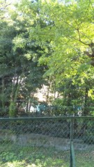 安西早来 公式ブログ/こんにちは!緑よ!グリーンよ! 画像1