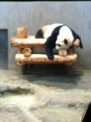 朝生あや 公式ブログ/眠たいです! 画像3