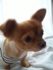 上村愛香 公式ブログ/ごー ほーむ。 画像2