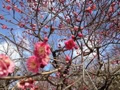 秋吉久美子 公式ブログ/北野天満宮 画像1