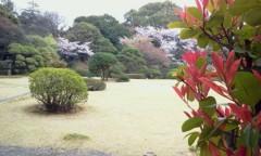 秋吉久美子 公式ブログ/春だ 春だ 花吹雪 画像1