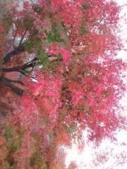 秋吉久美子 公式ブログ/冬 想う 画像1