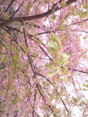 秋吉久美子 公式ブログ/静岡 画像2