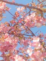 秋吉久美子 公式ブログ/めっけもの 画像1