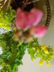 秋吉久美子 公式ブログ/春近し 画像1