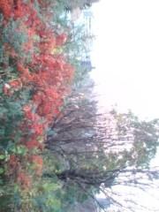 秋吉久美子 公式ブログ/冬 想う 画像2