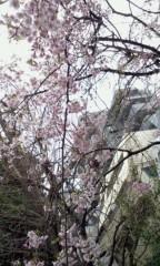 秋吉久美子 公式ブログ/春だ 春だ 花吹雪 画像2