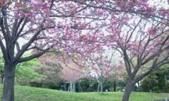 秋吉久美子 公式ブログ/花のお江戸 画像1