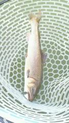 伊藤竜翼 公式ブログ/管理釣り場 画像1
