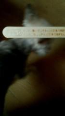 伊藤竜翼 公式ブログ/夏の風物詩 画像1