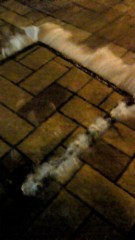 伊藤竜翼 公式ブログ/豪雨 画像1