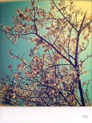 青木ケイト 公式ブログ/さくら。 画像1