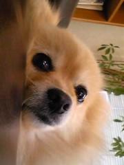 青木ケイト 公式ブログ/あぼかどーん 画像2