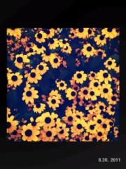青木ケイト 公式ブログ/紫陽花。 画像1