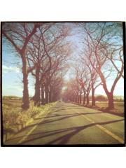 青木ケイト 公式ブログ/正月早々に。 画像2