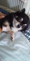 sabu 公式ブログ/はじめまして! 画像1