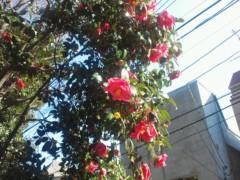 篠崎ゆき 公式ブログ/今日は4月。 画像1