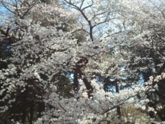 篠崎ゆき 公式ブログ/春〜 画像1