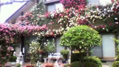 安藤優子 公式ブログ/薔薇 画像1