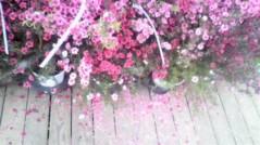 安藤優子 公式ブログ/花 画像2