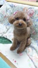 長島実咲 公式ブログ/可愛いい!!愛犬 画像1
