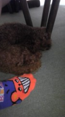 長島実咲 公式ブログ/びびりな私と犬 画像1
