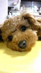 長島実咲 公式ブログ/私のお母さん 画像1