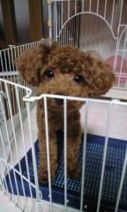 長島実咲 公式ブログ/ナルシストな犬 画像1