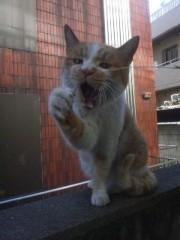 猫ひろし 公式ブログ/レース前日 画像1